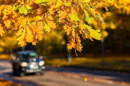 Aufnahme eines Autos auf einer mit herbstlichen Blättern bedeckten Autos.